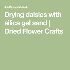 Drying daisies with silica gel sand | Dried Flower Crafts