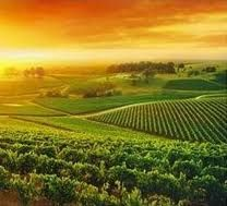 Loved this place, where my daughter used to live here for a year--Hunter valley.