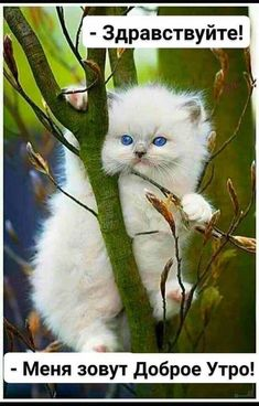 The Fatal Gift of Beauty Kittens Cutest, Cats And Kittens, Cute Cats, Animals And Pets, Baby Animals, Cute Animals, Happy Saturday Quotes, Pink Tea Cups, Montage Photo