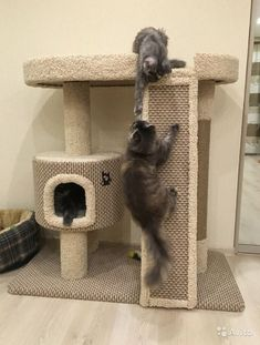 Pictures Of Cats Cat House Diy, Cat Towers, Cat Playground, Cat Room, Cat Condo, Pet Furniture, Cat Accessories, Scratching Post, Cat Wall