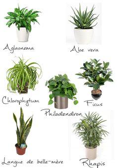 Véritable élément de décoration la plante apporte un bout de nature dans votre intérieur, c'est la touche finale de votre décor. Les plantes ne sont pas de simple objets de décoration que l'on pose bêtement au coin du salon, c'est un élément particulier et vivant qui va vous demander un …