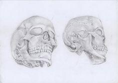 Práctica de calavera humana desde diferentes vistas que realicé en clases, sobre papel blanco con lápiz. #illustration #illustración dibujo #drawing #art #arte #illustrator #ilustradror #dibujante #skull #calavers #anatomía #anatomy