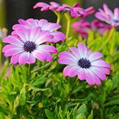 Plantation, Gardening, Gardens, Sun, Garden Deco, Vegetable Gardening, Plant Cuttings, Plants, Perennial