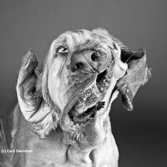 Hundeportraits und Hundefotografie- mehr dazu in unserem Blog unter http://www.diehundewiese.de/hundelifestyle/hunde-portraits-schuttel-dich-fellnase/ Pics by Carli Davidson hund hunde dog dogs
