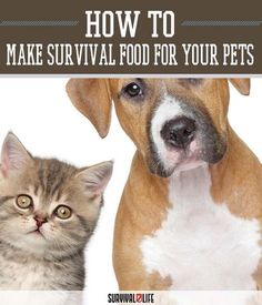 Survival Food for Pets | SHTF Preparedness Tips And Ideas by Survival Life at survivallife.com/...