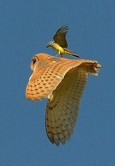 fabulous foto...   hey, i know some people like the small bird using other