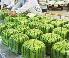 square-water-mellons
