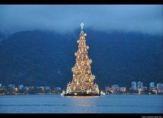 Beautiful Christmas Trees Rio De Janeiro