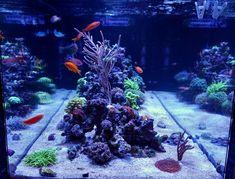 Reef Aquarium, Saltwater Aquarium, Mantis Shrimp, California Love, Corals, That Look, Building, Link, Saltwater Tank