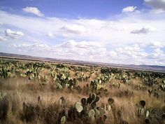 Encinillas, Ojuelos De Jalisco, México.
