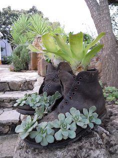 Suculentas e bromélia na bota