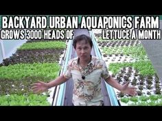 Backyard Urban Aquaponics Farm Grow 3000 Heads of Lettuce a Month  http://youtu.be/wpGwK81tOIs