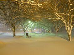 Campus snow, January 2011
