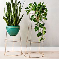 Use a tomato cage as a plant stand. You can even spray paint them to match your space.