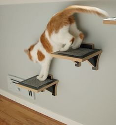 Searching for functional and attractive cat shelves? Check out our exclusive Guide to Cat Shelves & Perches! You'll find exactly what you're looking for. Cat Shelves, Shelf, Cat Habitat, Modern Cat Furniture, Cat Carrier, Animal Projects, Cat Walk, Cat Tree, Litter Box