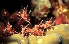 Crustaceans, lobsters