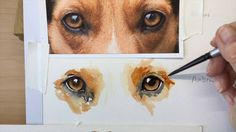 How to paint a dog's amber eyes - YouTube