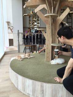 mocha tokyo cat cafe - Google Search