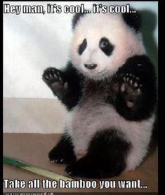 Cute panda with captions
