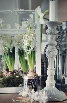 hyacinth!