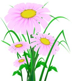 Transparent Pink Daisies PNG Clipart
