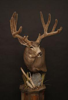Taxidermy Decor, Taxidermy Display, Whitetail Deer Hunting, Deer Mounts, Mule Deer, Animal Heads, Aesthetic Art, Hunting Stuff, Elk