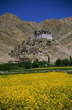 View of a monastery on a hill, Chemrey Monastery, Ladakh, India