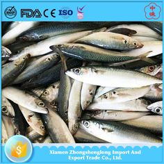 New Coming Frozen Whole Round Pacific Mackerel Scomber Japonicus