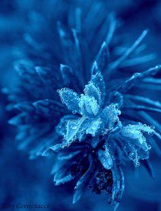 Photograph Azul - Wild plant by katy cermolacce  on 500px