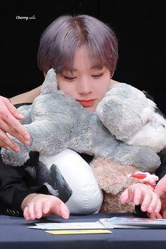 Park Jihoon Produce 101, Pink Park, Jinyoung, Kpop, My Love, Korea, Animal, Singers, Animals