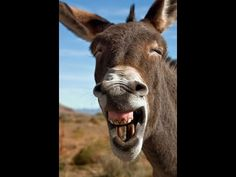 Funny animals compilation 2015 # 3