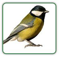 Garden Pests A-Z | List of Garden Pests for Natural Pest Control