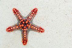 Free photo: Starfish, Sea, Africa, Kenya - Free Image on Pixabay - 74535
