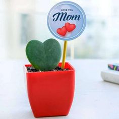 Let's give our heart to nature! Celebrate the season of love with thoughtful green gifts. Jade Plants, Fruit Plants, Flowering Plants, Planting Flowers, Planter Accessories, Peace Lily Plant, Lucky Bamboo Plants, Save Mother Earth, Buy Gifts Online