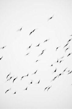 sam wilson/ falcon
