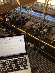 It's the official, 24/7, Modern Farmer CowCam, live from Never Rest Dairy in Watertown, Wisconsin!