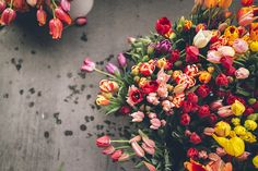 [Arthur Chang] Tulips at the market, via Flickr.