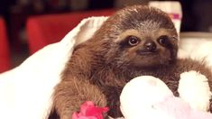 Good morning. This sloth wants to give you flowers and hold your hand.