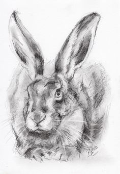 ORIGINAL-A4-Wildlife-Pencil-Sketch-of-a-HARE.jpg (1106×1600)