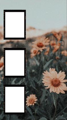 Framed Wallpaper, Cute Wallpaper Backgrounds, Aesthetic Iphone Wallpaper, Cute Wallpapers, Aesthetic Wallpapers, Polaroid Picture Frame, Photo Polaroid, Polaroid Pictures, Polaroids