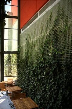 "Greenscreen is a company that sells modular wire trellis systems that can be applied in many different configurations, such as columns, curved walls, attached to the facade of a building, etc. This is a solution for creating a light-weight green wall, rather than a ""living wall"", so it is probably more cost-effective (checking on pricing) because it does not involve retainting soil vertically or an irrigation system"