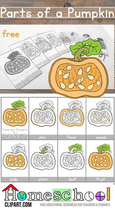 Free Parts of a Pumpkin Montessori Nomenclature Cards.  Also quite a few free worksheets for science journals