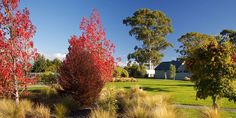 Autumn grounds at Vintners Retreat Good Grammar, Holiday Time, Time Out, New Zealand, Vineyard, Country Roads, Autumn, Activities, Places