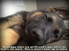 So sweet Utterly precious -doggy needs a lil pillow under his head. What a sweetheart. ...