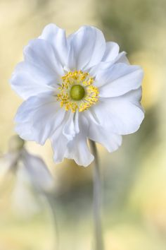 ~~anemone by Mandy Disher~~