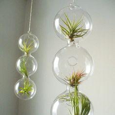 Beautiful hanging terrarium