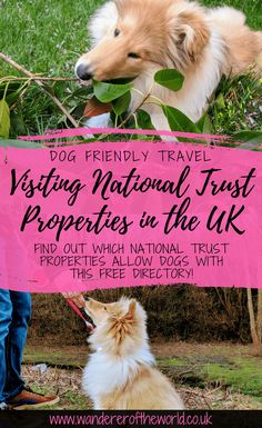 Is the National Trust Dog Friendly? (With FREE Dog Friendly Directory) Dog Travel Accessories, Pet Travel, Travel Uk, Travel Tips, Dog Friendly Hotels, Eco Friendly, Road Trip With Dog, Dog Friendly Holidays, Dogs Trust