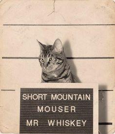 Mr Whiskey, enough said.