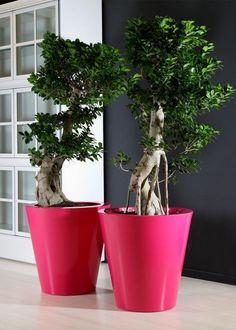 kuno planter | Euro3plast