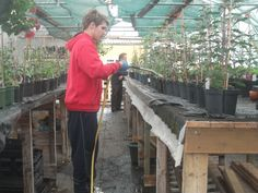 FACET THE CHARITY WHICH TEACHES THOSE YOUNG ADULTS IN CAMBRIDGESHIRE WHO HAVE LEARNING OR OTHER DISABILITIES. STUDENTS ARE  TAUGHT GARDENING, GREENHOUSE AND PROPAGATION
